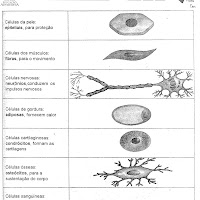 Tipos de celulas.jpg