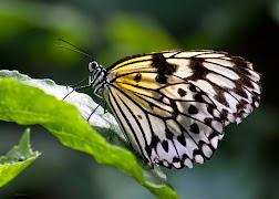 2013-4-25-vlinder.jpg