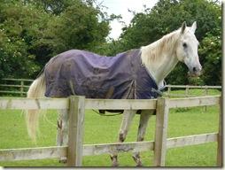 10 A horse