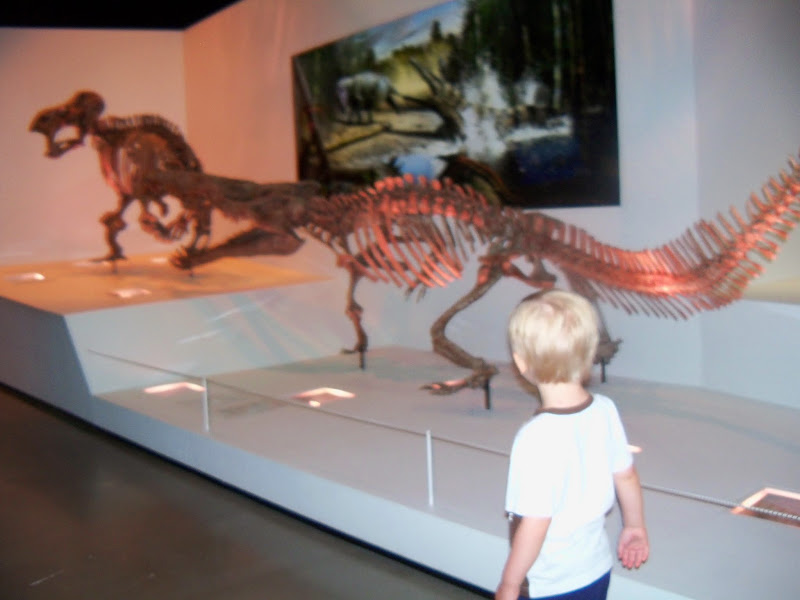 Houston Museum of Natural Science - 116_2705.JPG