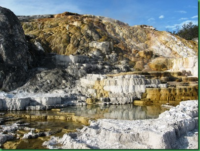 Mammoth Hot Springs Terraces (273)