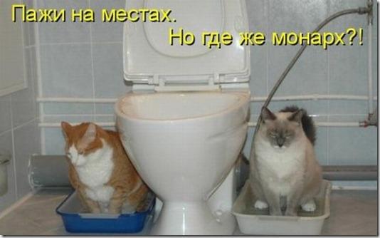 1297989267_kotomatritsa-13