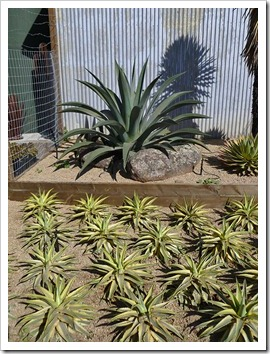111001_succulent_gardens_11