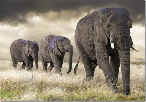 Wildlifephotographyelephant_thumb1
