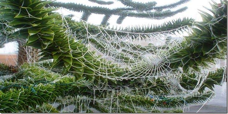 spider webs christmas tree