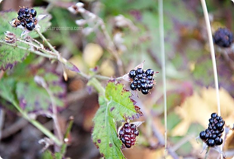 Wild-berries-(1)