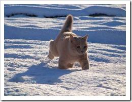 kitty9