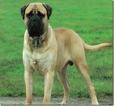 entrenamiento de perros guardian2