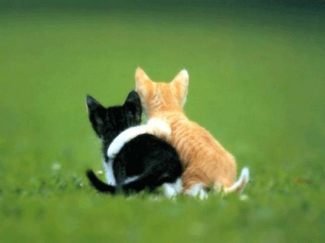 amistad-gatos