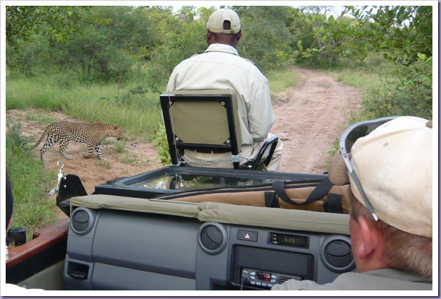 Hoedspruit-África-do-Sul-Safari-Game-Drives-Onça