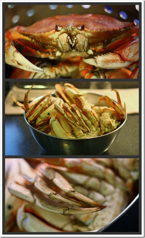 crab_collage