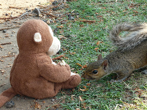 CM feeds squirrel