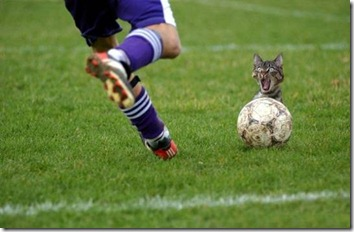 cat and ball