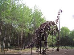 2008.09.10-006 squelette de brachiosaure