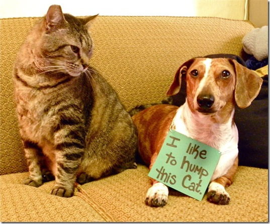 dog-shaming-bad-12