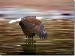 صور ناشيونال جيوغرافيك hd