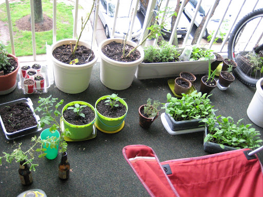 The whole shebang...well, half actually.  The other half is mostly seedlings on my windowsill.