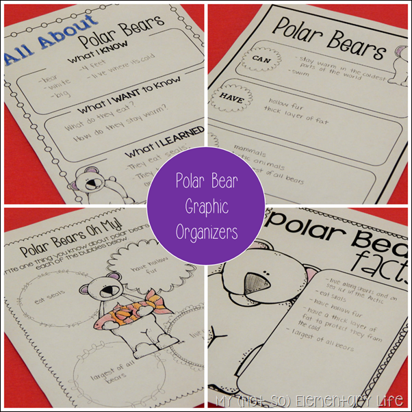polar bear graphic organizers