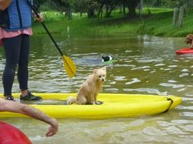 Pets Adventure 15 (114)