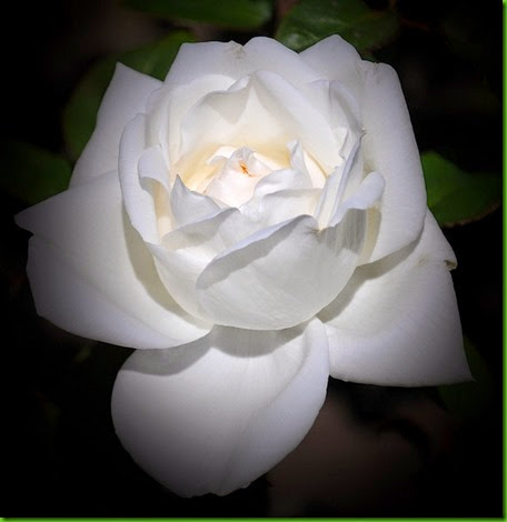Rosa YOUKI SAN