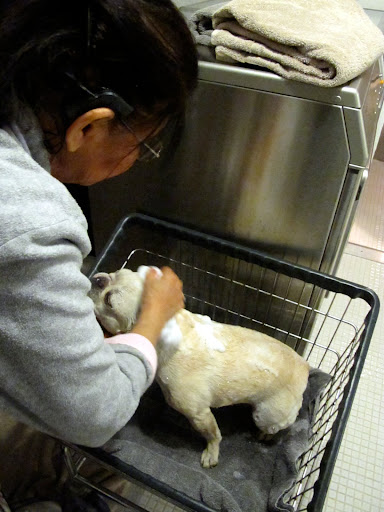 Look!  She's in the laundry cart!