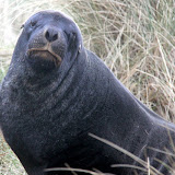 This Is My Happy Face - Otago Peninsula, New Zealand