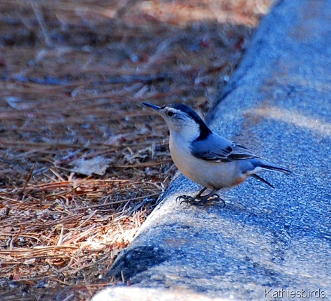 16. april 2012 Nuthatch-kab