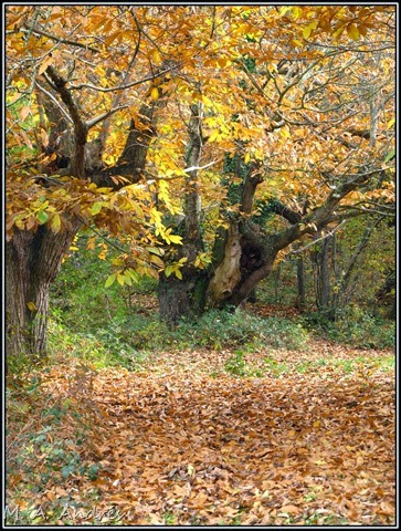 Lantz otoño 018