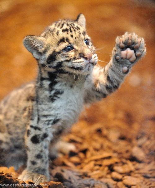 filhotes recem nascidos zoo zoologico desbaratinando animais lindos fofos  (32)