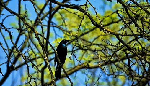 Pittsburgh Zoo 6