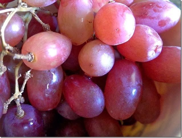 grapes-public-domain-pictures-1 (2312)