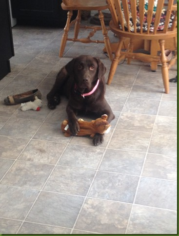 Zoe with toy