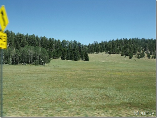 03 Meadow along SR67 Kaibab NF AZ by Mike (1024x768)