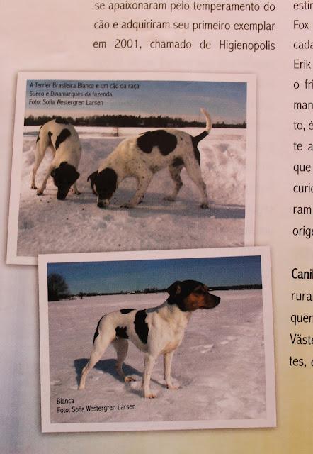 10 Sofalex-Pequenos Cães.jpg