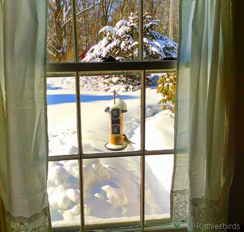 1c. Kitchen window feeder 2-16-14