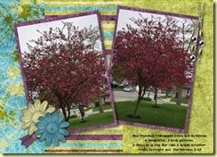 crabappletrees