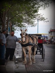 Horse & Carriage Rides in Canal Park