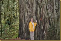 Redwoods Judy 3a