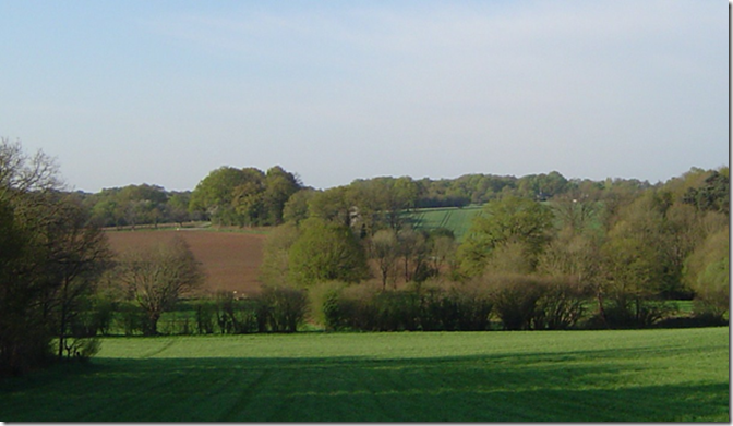 Derrière le Gesvres (rideau d'arbres), sur un replat en pente douce, le terroir de La Ménardais (2012)