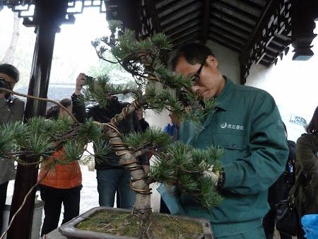 Specialistul in bonsai