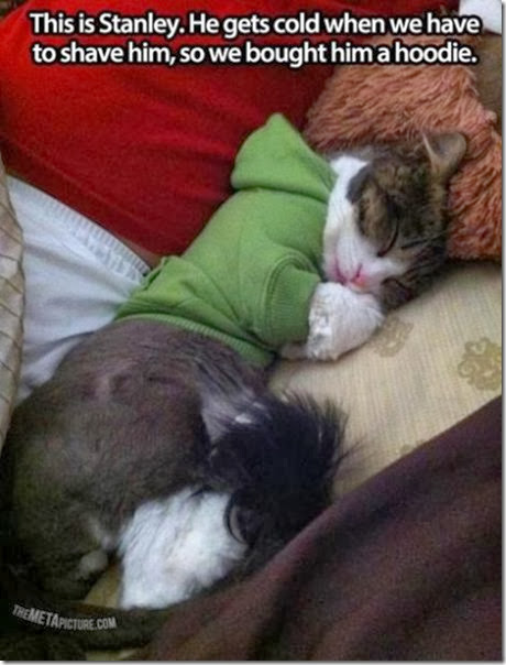 awesome-pet-owners-13