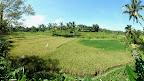 Nos premières rizières