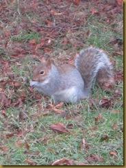 IMG_0742 Squirrel