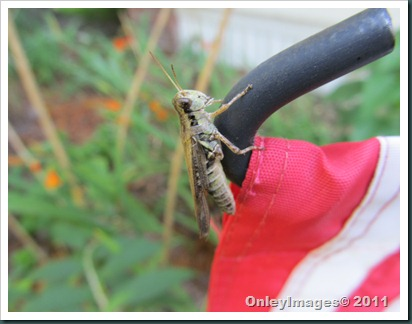 grasshopper-flag0711 (9)