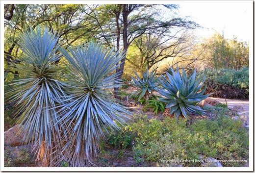 131203_TucsonBotanicalGarden_138