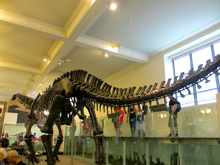 Museums of New York: Dinosaurs Hall