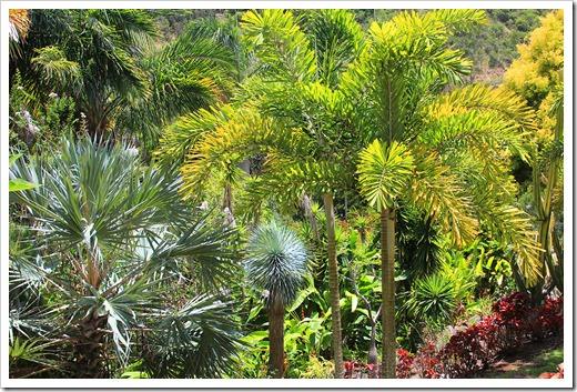 130713_TropicalGardensOfMaui_053