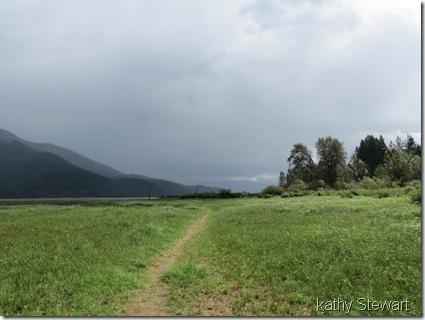 Path across the grasslands