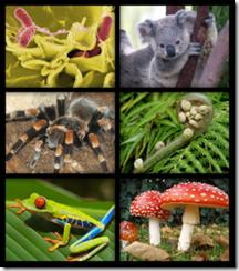 living organisms
