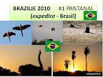 BRASIL 2010_Pantanal_2_